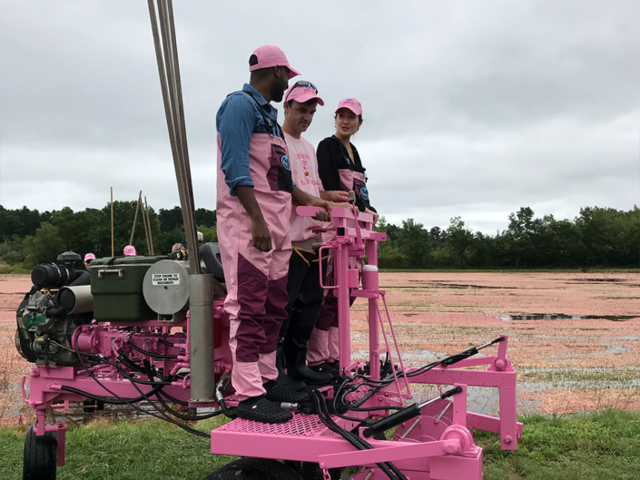 Three people riding machine in Ocean Spray cranberry bog