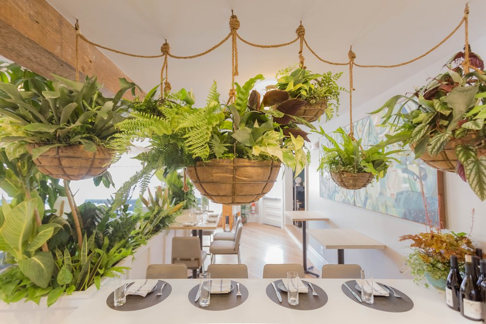 plants overhanging a table at a CBC experience